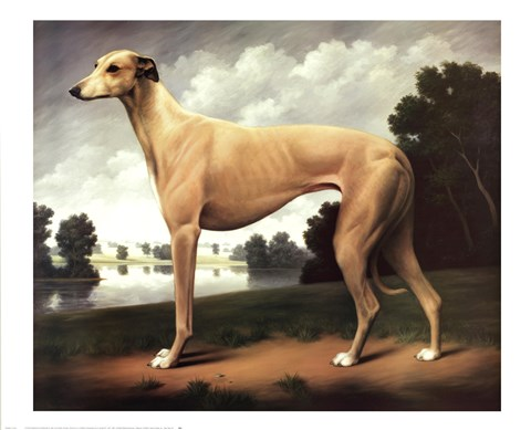 Framed Greyhound in a Parkland Landscape Print