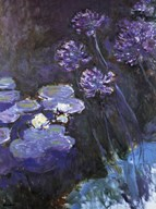 Waterlillies and Agapanthus Art