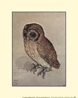 Little Owl, c.1508