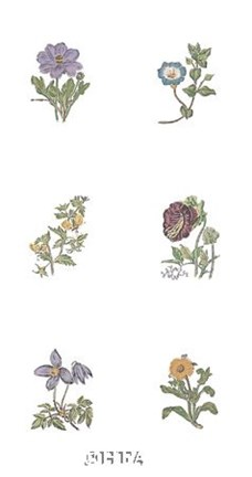 Framed Floral Set (Set of Six) Print