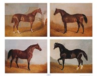 Stable Mates (Set of Four)  Fine Art Print