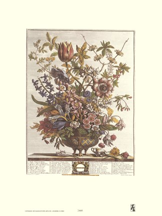 Framed February/Twelve Months of Flowers, 1730 Print