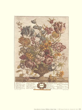 Framed April/Twelve Months of Flowers, 1730 Print