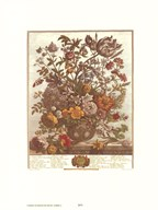 Twelve Months of Flowers, 1730/May  Fine Art Print