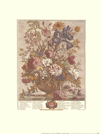 Framed June/Twelve Months of Flowers, 1730 Print