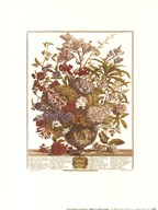 Twelve Months of Flowers, 1730/July  Fine Art Print