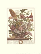 Twelve Months of Flowers, 1730/August  Fine Art Print