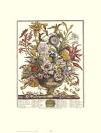 Twelve Months of Flowers, 1730/September  Fine Art Print