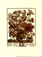 Twelve Months of Flowers, 1730/October  Fine Art Print