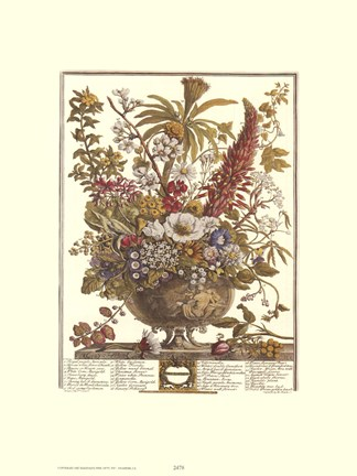 Framed December/Twelve Months of Flowers, 1730 Print
