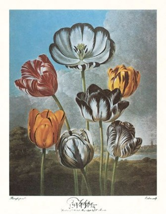 Framed Group of Tulips Print