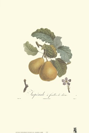 Framed Pears/Imperiale Print