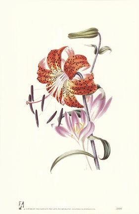Framed Flowers (Untitled) Tiger Lily Print