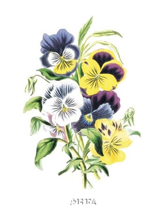 Framed Flowers (Untitled) - Bouquet of Pansies Print