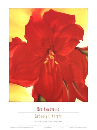 Framed Red Amaryllis, 1937 Print