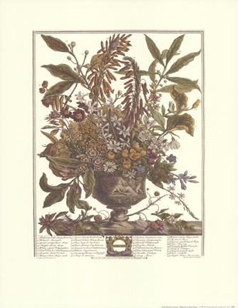 Framed January/Twelve Months of Flowers, 1730 Print