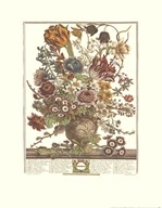 Twelve Months of Flowers, 1730/March  Fine Art Print
