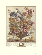 Twelve Months of Flowers, 1730/April  Fine Art Print