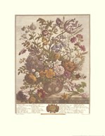 Twelve Months of Flowers, 1730/May  Fine Art Print