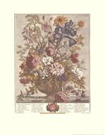 June/Twelve Months of Flowers, 1730  Fine Art Print