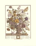 November/Twelve Months of Flowers, 1730  Fine Art Print