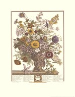 Twelve Months of Flowers, 1730/November  Fine Art Print