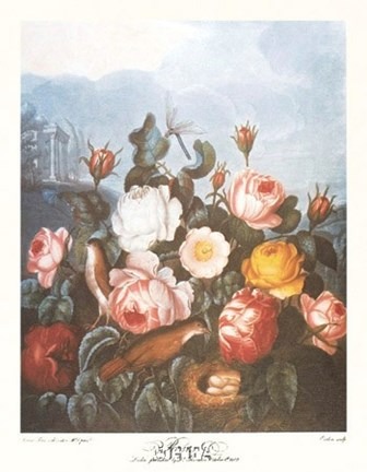 Framed Group of Roses Print
