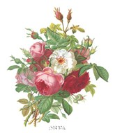 Antique Roses Art