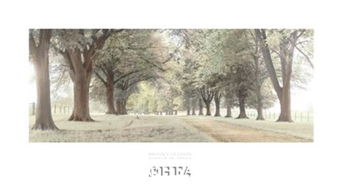 Framed Avenue of Trees Print