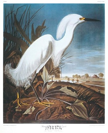 Framed Snowy Heron or White Egret Print