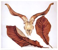 Ram's Skull with Brown Leaves  Fine Art Print