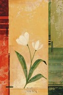 Two White Tulips  Fine Art Print