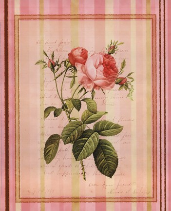 Framed Botanical Rose I Print