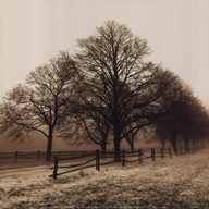 Row of Trees  Fine Art Print