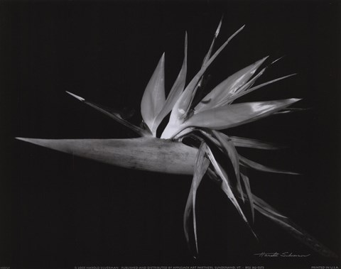 Framed Bird of Paradise Print