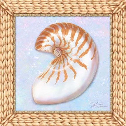 Framed Seashell I Print