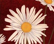 White Daisy On Red