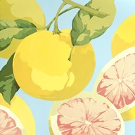 Fresh Grapefruits  Fine Art Print