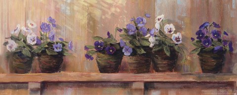 Violets In Pots Fine Art Print By Carol Rowan At
