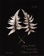 Fern Plate No. 714 Art