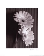 Fresh Cut Gerbera Daisy I Art