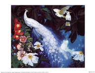 White Peacocks And Cockatoos  Fine Art Print
