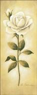 White Roses I Art
