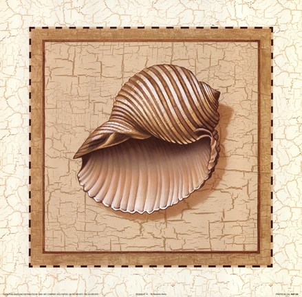 Framed Seashells III Print
