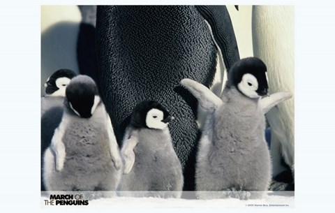 Framed March of the Penguins Babies having Fun Print