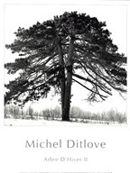 Arbres D&#39;Hivers II
