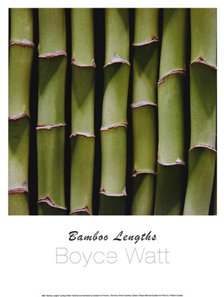 Framed Bamboo Lengths Print