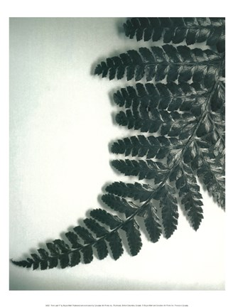 Framed Fern Leaf II Print