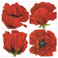 Poppy Quartet  Fine Art Print