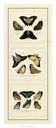 Framed Antique Butterfly Panel I Print